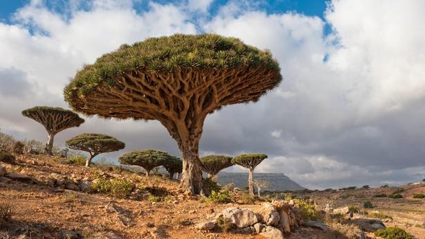 Socotra,Yemen (iStock/PA)