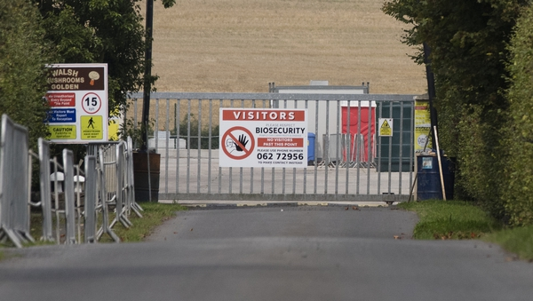 Walsh Mushrooms employs 170 people atits premises outside the village of Golden (Pics: RollingNews.ie)
