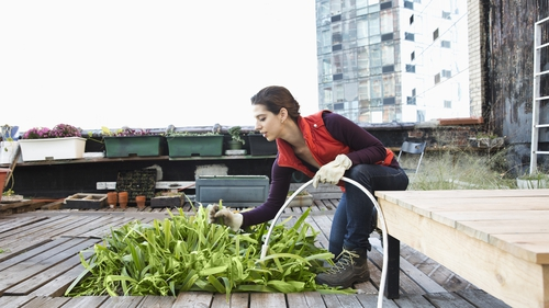 """""""With more people wanting organic produce that is grown and distributed with a low carbon footprint, growing and raising urban food is slowly becoming an integral part of our towns and cities"""""""