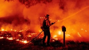 Higher temperatures contributed to devastating wildfires across Europe and the US last month