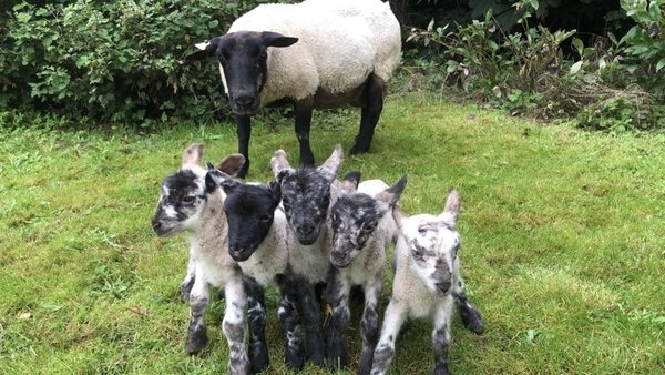 New arrivals on the Egan family farm in Taughmaconnell, Co Roscommon