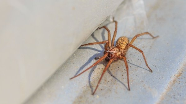 Autumn brings uninvited guests.