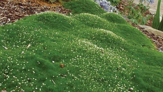 Naturefile - Moss