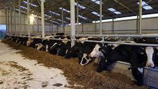 Dairy farmer Shane Fitzgerald