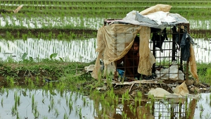 An Indonesian boy sits inside a cage, where he has been locked up in the middle of rice fields for 7 years by his parents because he suffers from mental illness