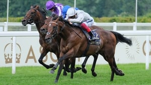 Dual Group One winner Palace Pier is bidding to stretch his unbeaten record to six races