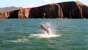 A study of dolphins in the area began in 1993 (Pic: RollingNews.ie)