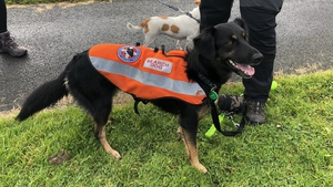 Bailey is just one step away from getting her red tag which puts her in an elite group of search and rescue dogs