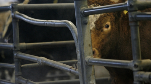 """""""In some farming sectors, antibiotics are used routinely to maintain animal health during the year"""""""