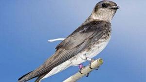 Naturefile - Songbird Migrations