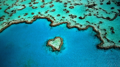 The reef is about 6km from the edge of the Great Barrier Reef (file pic)
