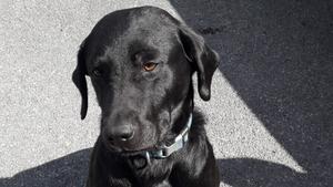The garda dog, 'Rex' detected the handgun hidden underground