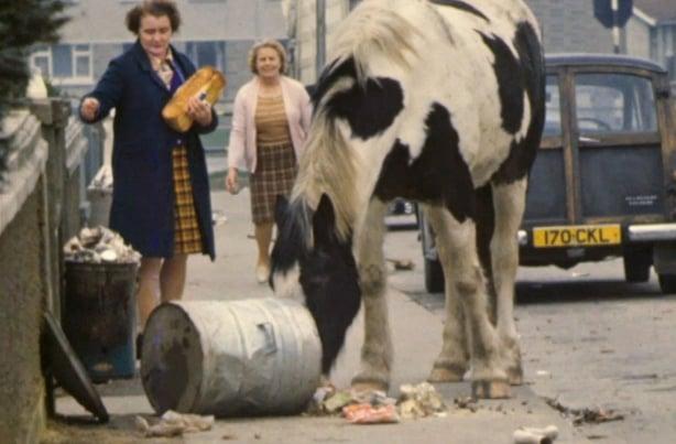 Limerick Horses Running Wild on Southill (1975)
