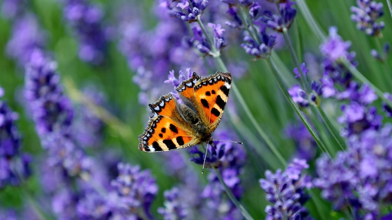 A red admiral butterfly is among the more than 800 different species of plant, animal and fungus recorded