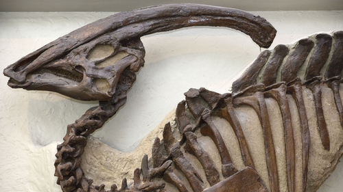 Dinosaur groups such as hadrosaurs (pictured) were thriving when the asteroid hit