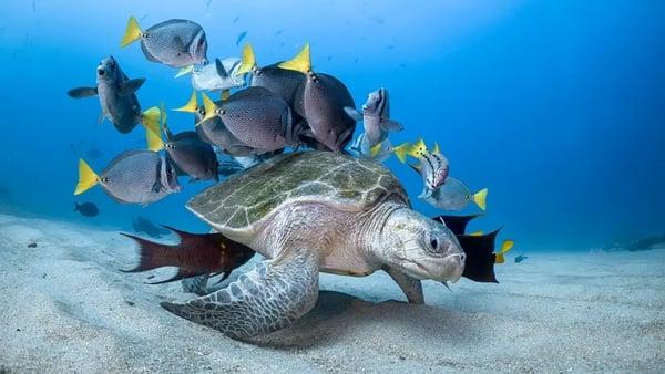 Super snapshots of life beneath the waves.