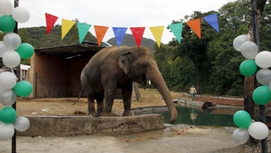Balloons and decorations for Kaavan's farewell party (EPA Images)