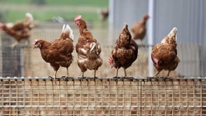 Outbreaks reported on farms have led to the death or culling of at least 1.6 million chickens and ducks