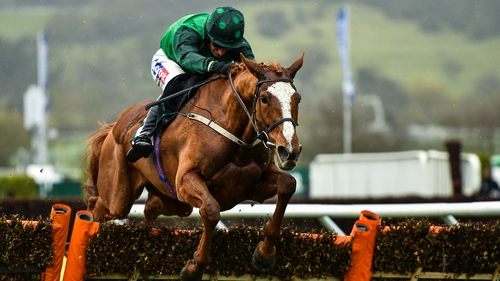 Concertista, with Daryl Jacob up, on her way to winning the Mares' Novices' Hurdle at Cheltenham back in March.