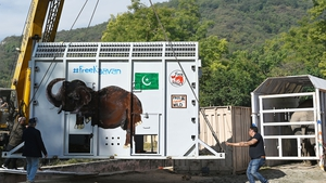 Kaavan's case and the woeful conditions at the zoo resulted in a judge this year ordering all the animals to be moved