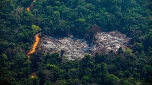 More than 11,000 square kilometers of rainforest was destroyed in Brazil in the 12 months to August