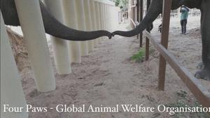 Image: Four Paws - Global Animal Welfare Organisation