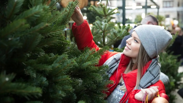 Experts offer tips on how to prune your tree inconspicuously to make sure it fits into your space.