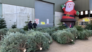 Wheelock's Christmas Tree Farm in Co Wexford are seeing people buy two trees instead of one in some instances