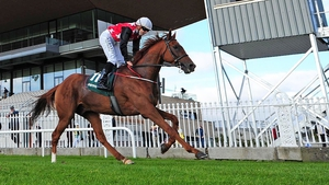 Cape Gentleman could make an appearance at Leopardstown