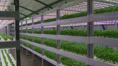 Hydroponic farming uses water rather than soil to grow plants