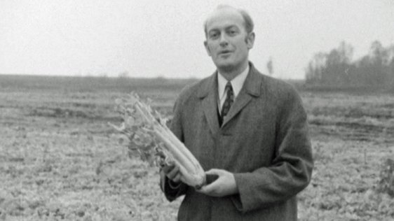 Larry Sheedy 'On The Land' holding a bunch of celery (1971)