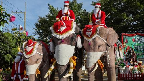 Elephants arriving at Jirasat Wittaya School near Bangkok, Thailand