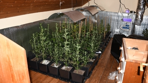 The growing facility was ventilated and insulated to grow cannabis (pic: @gardainfo)