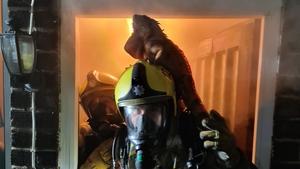 The iguana jumped on the firefighter's helmet