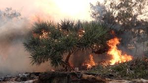 Bushfire on heritage site of Fraser Island last month