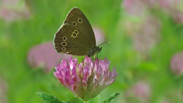 Hannah Stephenson finds out how to rewild your garden.