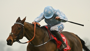 Honeysuckle is expected to land the Chanelle Pharma Irish Champion Hurdle