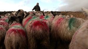 Farmer John Joe Mac Gearailt with his sheep on Cnoc Bréanainn