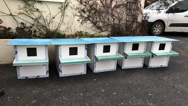To date, 20 nesting boxes have been ordered by locals in Galway and are currently under construction