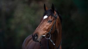 Tiger Roll: The People's Horse