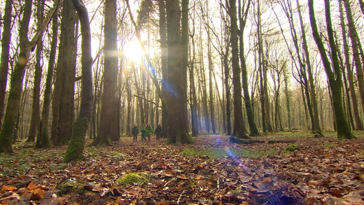 Government set to adapt new approach to forestry