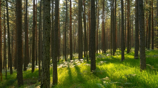 Government's new approach to forestry will 'set out a vision for its future'