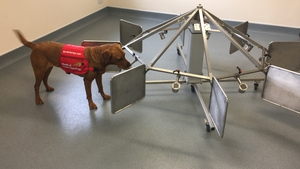 Florin the Labrador was trained to detect prostate cancer in urine samples