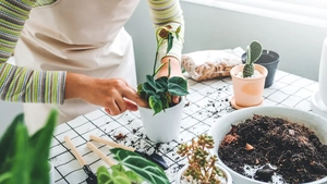 Bringing greenery into your home can have a calming effect, experts tell Liz Connor.