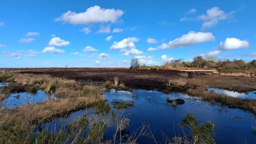It is one of the country's largest raised bogs, covering 325 hectares (Image: Birdwatch Ireland)