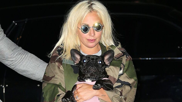 Lady Gaga and dog pictured in 2015