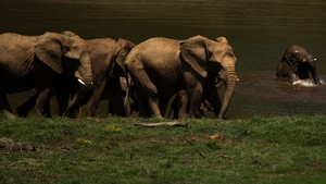 Elephants at the Cabarceno Natural Park near Santander in Spain (File pic)