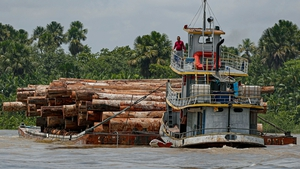 More than half of the destruction since 2002 has been in South America's Amazon and bordering rainforests