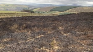 The blaze on Scar mountain in Co Wicklow affected around 50 hectares of land