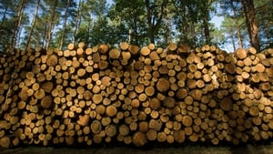 Felling would not occur in areas of forest that are more than 100 years old
